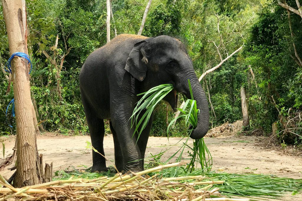 Our Elephants Diamond