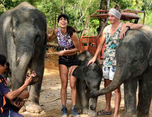 Elephant Retirement Park Phuket – Opening Soon!